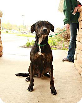 Labrador Retriever/Rottweiler Mix Dog for adoption in Lancaster, Ohio - Mia