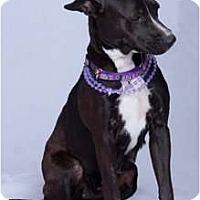 Adopt A Pet :: Ms. Pibbs - Vidor, TX