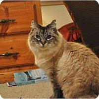 Adopt A Pet :: Mimi - Modesto, CA