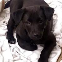 Adopt A Pet :: Pluto - Mount Juliet, TN