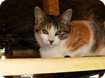 Calico Cat for adoption in Grand Saline, Texas - Isabel