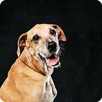 Adopt A Pet :: Shooter - Houston, TX