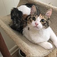 Adopt A Pet :: Tasha - Hammond, LA