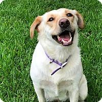 Adopt A Pet :: Bonnie from Texas - Brattleboro, VT