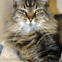 Adopt A Pet :: Miracle - Greensboro, NC