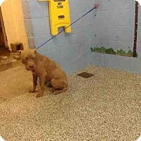 Adopt A Pet :: A505842 - San Bernardino, CA