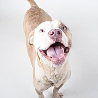 Adopt A Pet :: Bronze - Decatur, GA