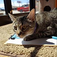Adopt A Pet :: Hildy - Sheridan, WY