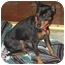 Photo 4 - Miniature Pinscher Dog for adoption in Poway, California - JAKE