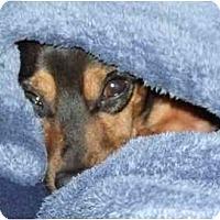 Adopt A Pet :: Tiny Tyrone - Summerville, SC