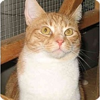Adopt A Pet :: Quincy - Cincinnati, OH
