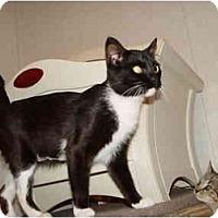 Adopt A Pet :: April - KANSAS, MO
