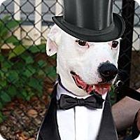 Adopt A Pet :: Spike - Bristol, TN