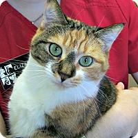 Adopt A Pet :: Josephine - Toledo, OH