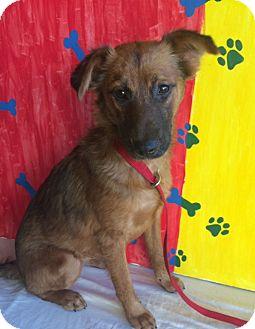 Collie/Shepherd (Unknown Type) Mix Puppy for adoption in San Diego, California - FIONA