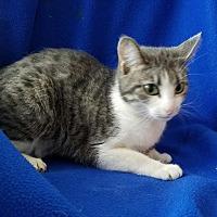 Adopt A Pet :: Babi - Sheridan, IL