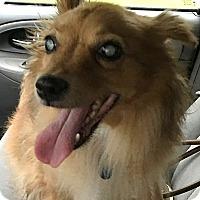 Adopt A Pet :: Fiona:loves CATS! (TN) - Spring City, TN
