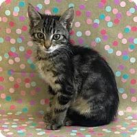 Adopt A Pet :: Sven - Los Angeles, CA