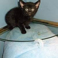 Adopt A Pet :: moonlight - grove city, OH