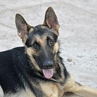 Adopt A Pet :: Otto - Irvine, CA