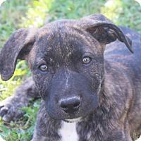 Adopt A Pet :: Kylie-Adoption Pending - Marion, AR