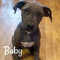 Adopt A Pet :: Baby - Des Moines, IA