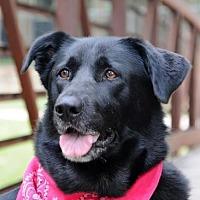 Adopt A Pet :: Sydney - McKinney, TX