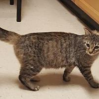 Adopt A Pet :: Leeloo - Americus, GA