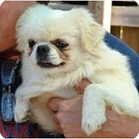 Adopt A Pet :: Carson - Afton, TN