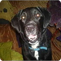 Adopt A Pet :: Rudy - North Jackson, OH