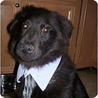 Adopt A Pet :: Boo Bear - Sicklerville, NJ