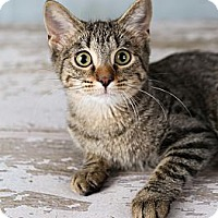 Adopt A Pet :: Simone - Eagan, MN