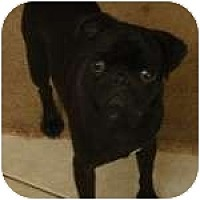 Adopt A Pet :: Freddie - Windermere, FL