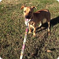 Adopt A Pet :: Conway - Marietta, GA