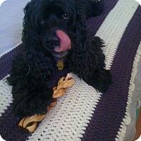 Adopt A Pet :: Wilbur - Santa Rosa, CA