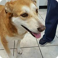 Adopt A Pet :: Peggy Sue - Kingwood, TX