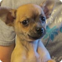 Adopt A Pet :: Flynn - Greenville, RI