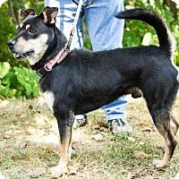 Adopt A Pet :: Conner - Clarkesville, GA