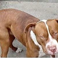 Adopt A Pet :: Maggie - Dana Point, CA
