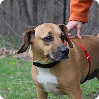 Adopt A Pet :: Holly - Sparta, NJ