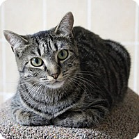Adopt A Pet :: Perette - Mississauga, Ontario, ON