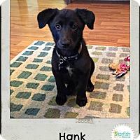 Adopt A Pet :: Hank - Plainfield, IL