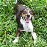 Adopt A Pet :: Gia - West Palm Beach, FL
