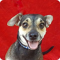 Adopt A Pet :: Mini - Irvine, CA