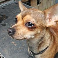 Adopt A Pet :: Lolita - Walton County, GA