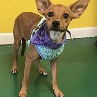 Adopt A Pet :: MAX - Fort Pierce, FL