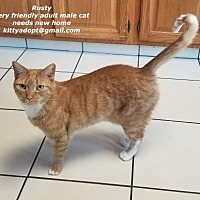 Adopt A Pet :: Rusty and Smokey - Marlboro, NJ