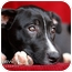 Photo 4 - Pit Bull Terrier Mix Puppy for adoption in Clarksburg, Maryland - Joey