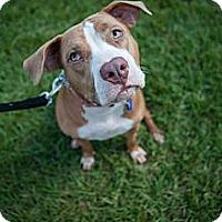 Adopt A Pet :: Gabby - Lake Worth, FL