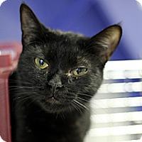 Adopt A Pet :: Ruffles - Chicago, IL